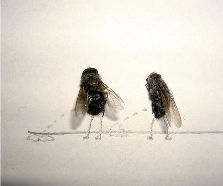 dead flies art 02 j