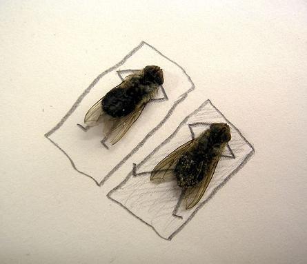 dead flies art 03 j