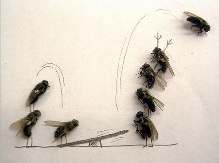 dead flies art 05 j