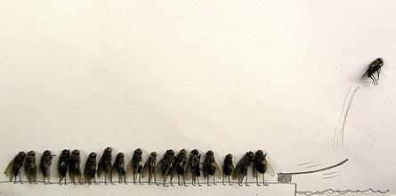 dead flies art 06 j