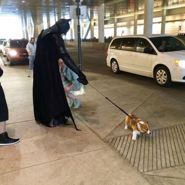 Batman kutyája