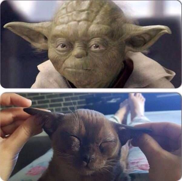 Yoda-Cica