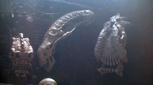 alien pradator