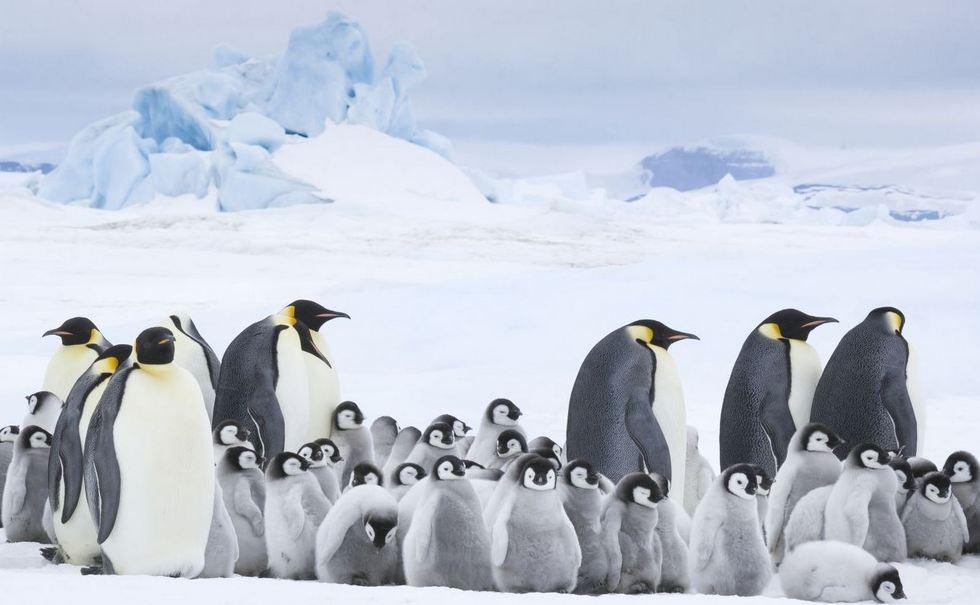pingvinek vadorlasa 2