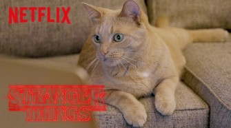 Netflix Employees Cats React Stranger Things Digital Exclusive Netflix