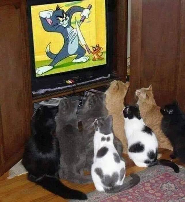 macskak